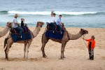 Camel Beach Safaris