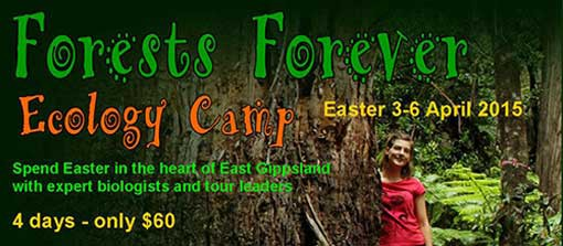 Forests Forever Eco Camp