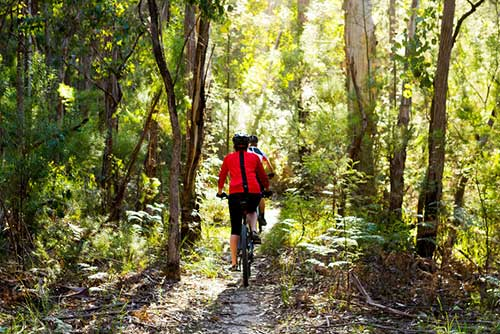 venture out bike tours